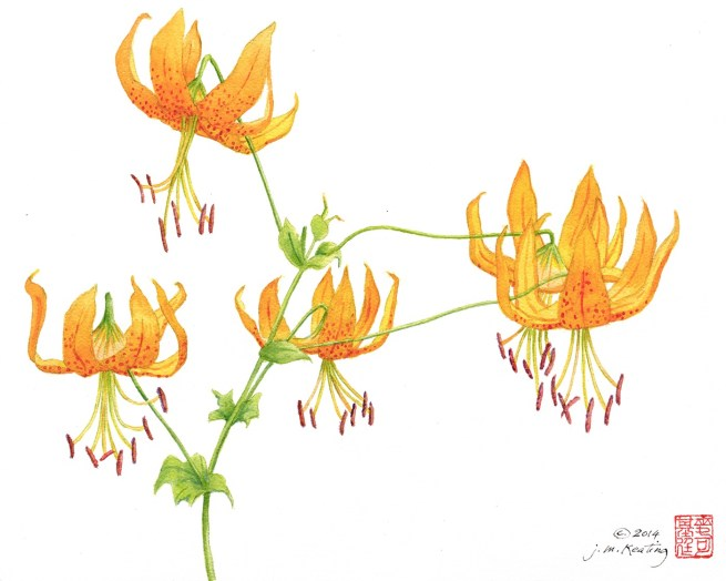 Day Lilies 1 - Watercolor - 11 x 15 inches