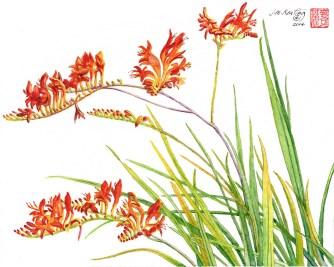 Firecracker Flower - Watercolor - 11 x 14 inches