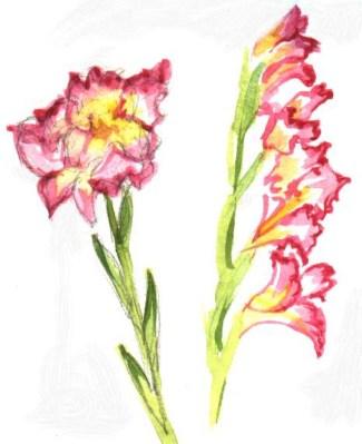 Gladiolus_Study