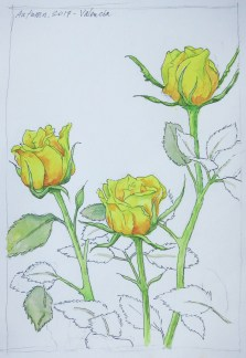 Three Roses - Watercolor - 7 x 10 inches