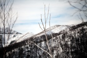 Branches and Hotham