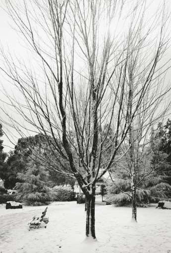 mount macedon in snow