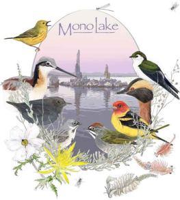 Mono-Lake-T-Shirt_000