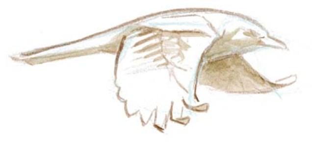 bird shape flt 2