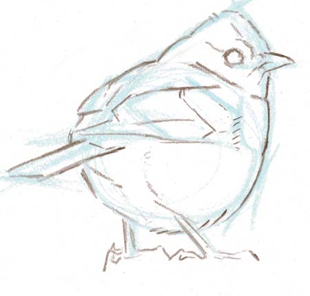 How to Draw a Bird, 3/4 view