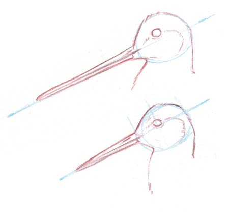 How to draw Shorebirds and Waterfowl (video)