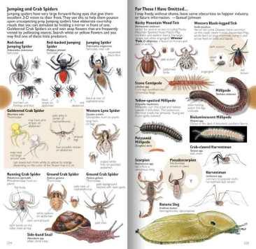 spider-tick-page