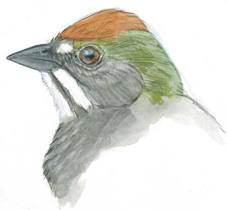 How to Draw Bird Beaks (video)