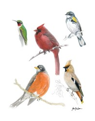 Birds of the East Coast