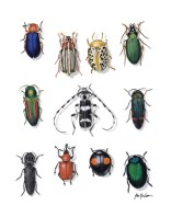 Beautiful Beetles