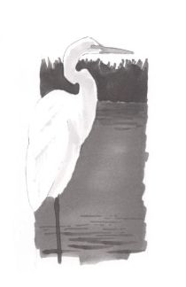 """Distant vegetation... Using vertical strokes, add the background vegetation with a """"5"""" Copic marker. Be careful around the edge of the egrets neck. Add a few horizantal strkes in the water to represent the reflection of the vegetation and the foreground wave shapes. These waves were created by using the brush tip to create a stroke that starts lighty, increases in pressure, then becomes light again. Try it on a seperate piece of paper before adding it to your drawing."""