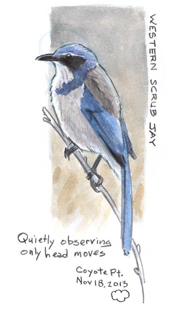 Nature Journaling for Birders (video)