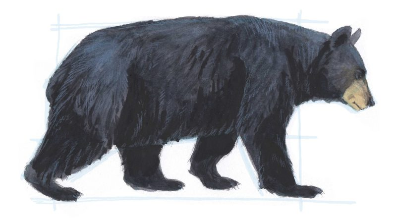 How to Draw Bears (video)