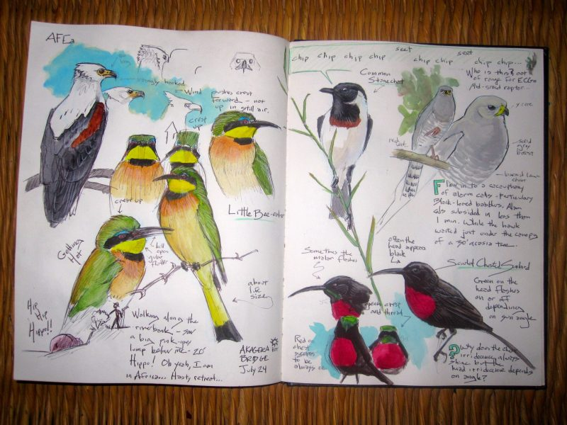 Birder's Field Journal Pro Tips with John Muir Laws and Fiona Gillogly