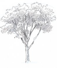 Add shadows to the trunk and branches. In some places you will see light trunks against dark leaves, in other spots you will see dark trunks against a lighter background.