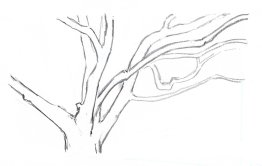 Now add the second layer of branches behind the first. Use lighter pencil pressure.