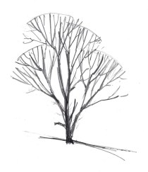 Add a few stray and broken branches.