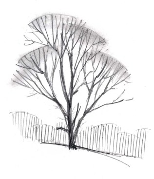 To suggest the finest twigs at the tips of the branches, use a blending tool to create areas of tone. Remember to add less detail in the background, the distant trees are suggested with an area of vertical lines, an approach that also works well with pen.