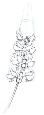Lupine sbs 14