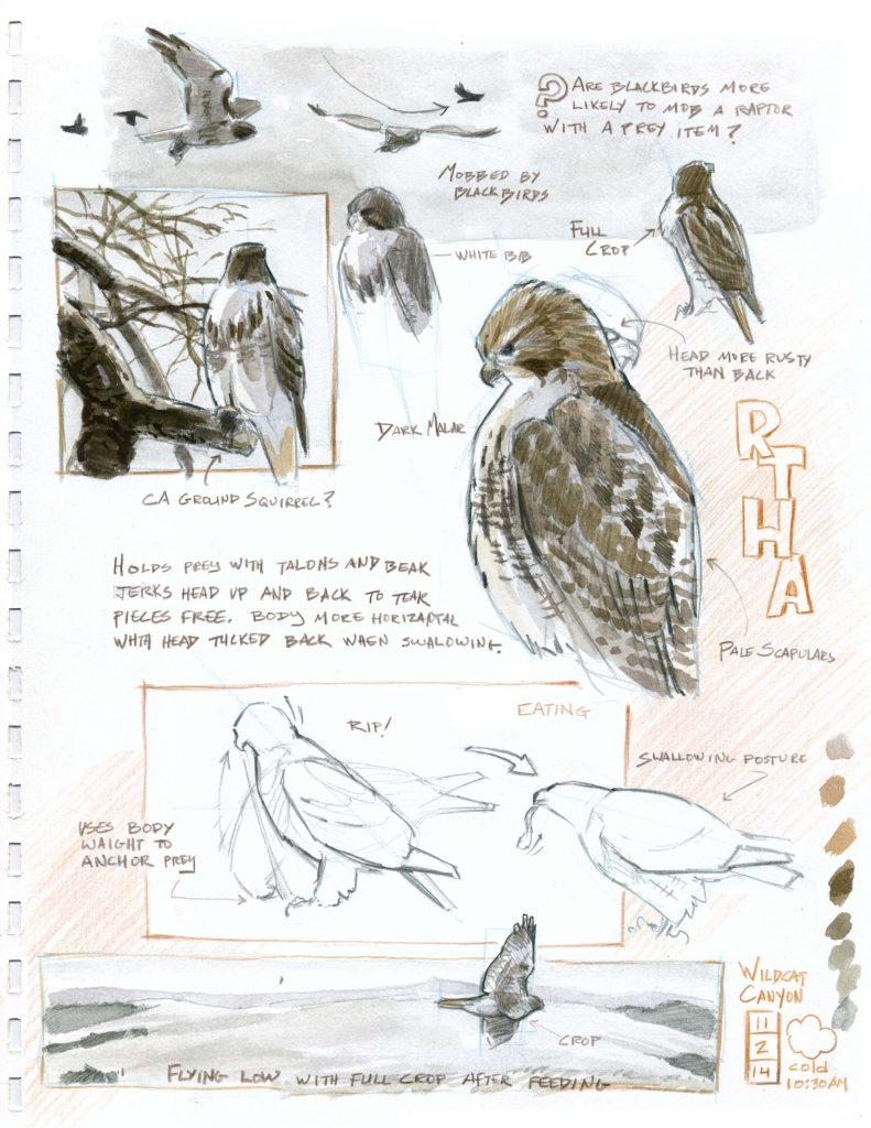 Nature Journaling for Birders