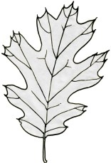 Trace the leaf veins with a thinner pen. If you can not clearly see the leaf veins through the film, move the mylar and strengthen the lines on the photocopy with a pen or a pencil.