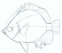 Draw over your light guidelines with deliberate smooth lines.