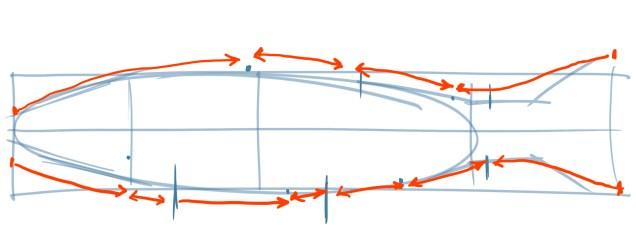 To help you place these dots and lines accurately, look at the length of the body segments between each fin. How far from the front or back does each fin begin and end?