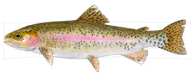 Crisp up the line around the edge and add white spots at the tips of the tail with gouache or a white paint marker. If you are drawing a fish as it appears underwater, stop here. For a wet fish OUT of the water, see the next step.