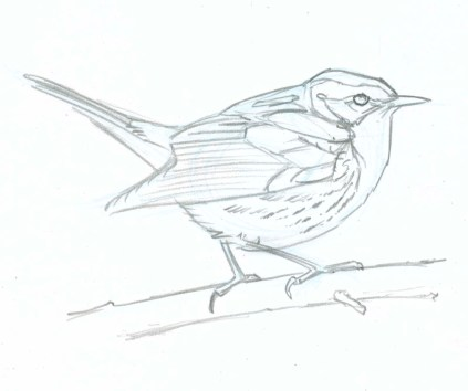 Start with a crisp line drawing of the bird.