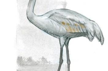 Sandhill Crane 18
