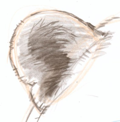 Carve the texture of the long tufts of hair into the mass of hair on the upper right. You are not drawing hairs, but the cracks between clumps of hairs. Add a suggestion of hair detail around the rim of the ear.