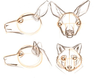 Ears:Prey animals often have a broad ear that swivels on a narrow base. Predator ears are often broad across the base.