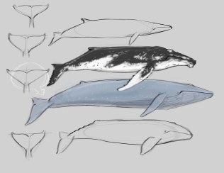 Blue Whales (not to scale) have an airbrushed smooth skin with minor mottling.