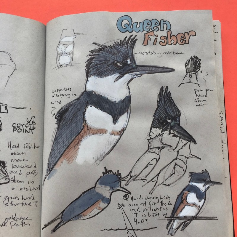 """Book Review: """"Nature Drawing a Tool for Learning"""" and """"Keeping a Nature Journal"""""""