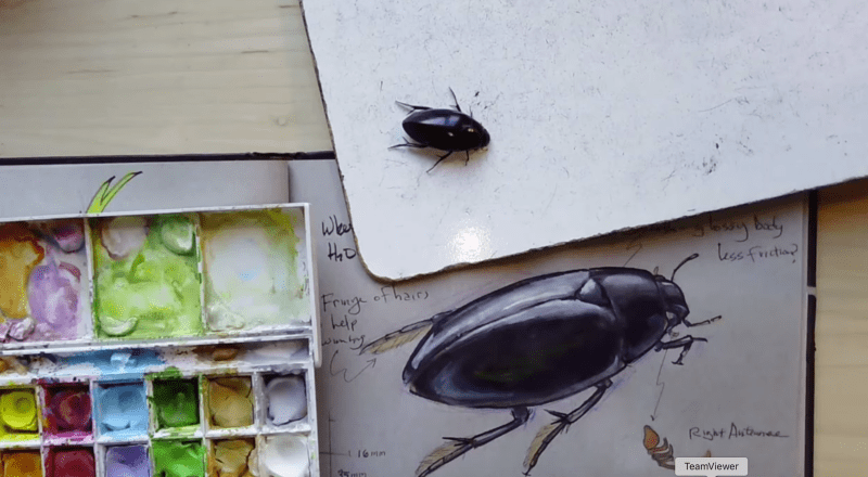How to Draw a Shiny Beetle (video)