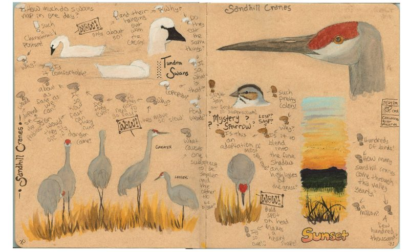 A Birder's Brain On Paper by Fiona Gillogly