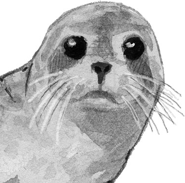 How to Draw Sea Lions, Seals, and Otters oh my! (video)