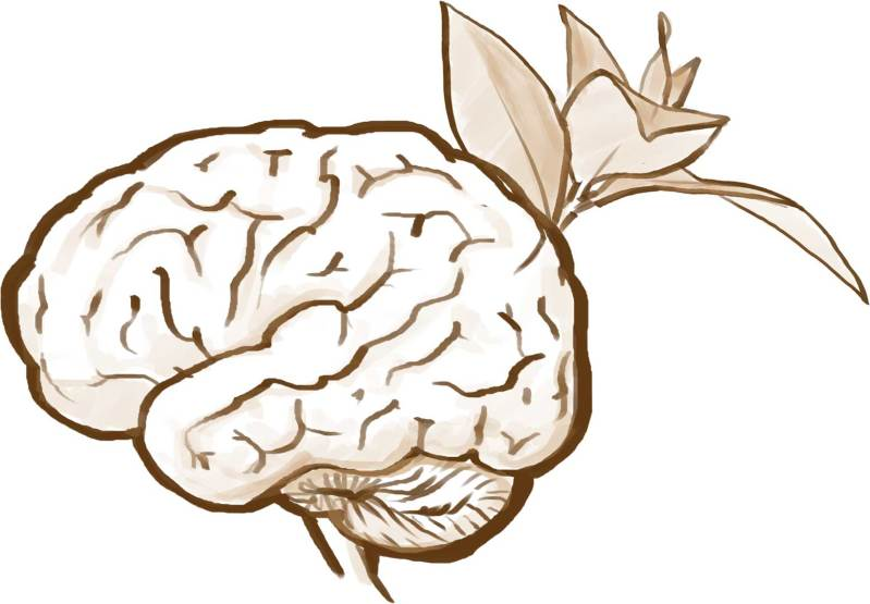 Building a bigger, better, bird brain