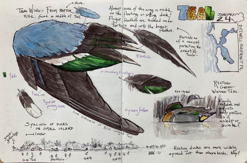 Birder's Field Journal FUNdamentals