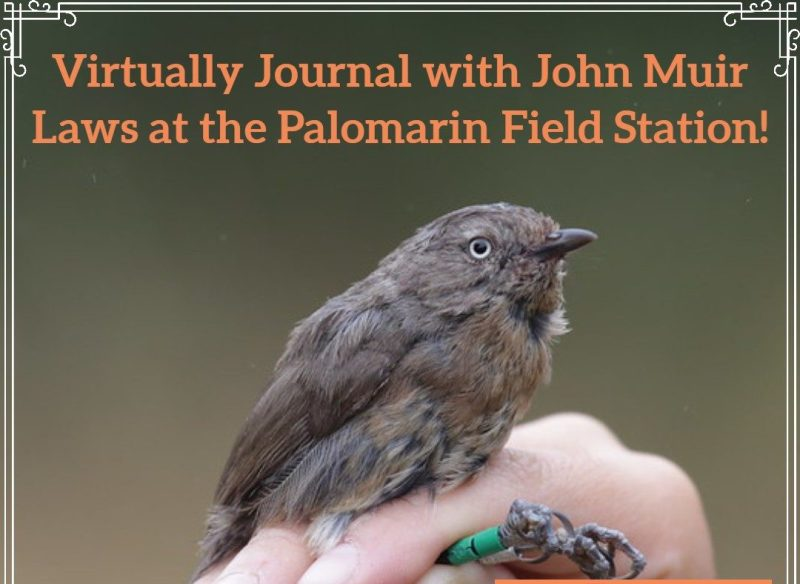Bird in the Hand: Virtual Nature Journaling with Point Blue