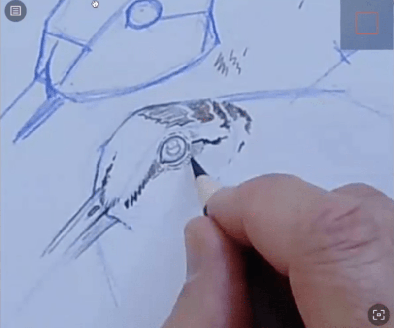 How to Draw a Woodcock