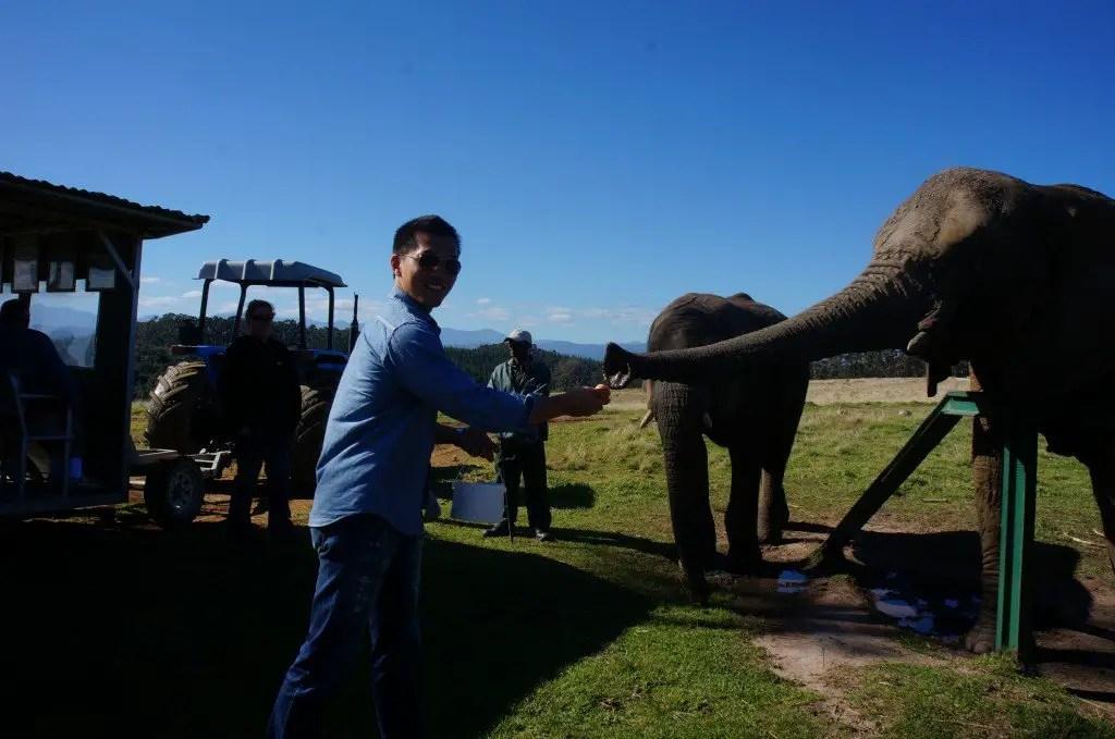Elephants at knysna elephant sanctuary