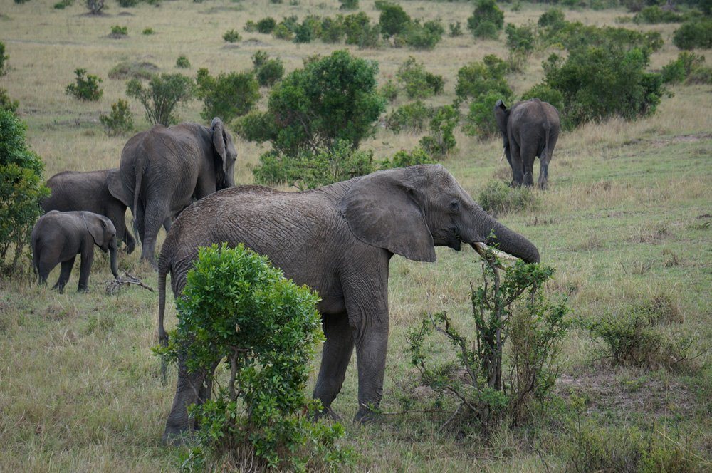 Herd of elephants close to the road.