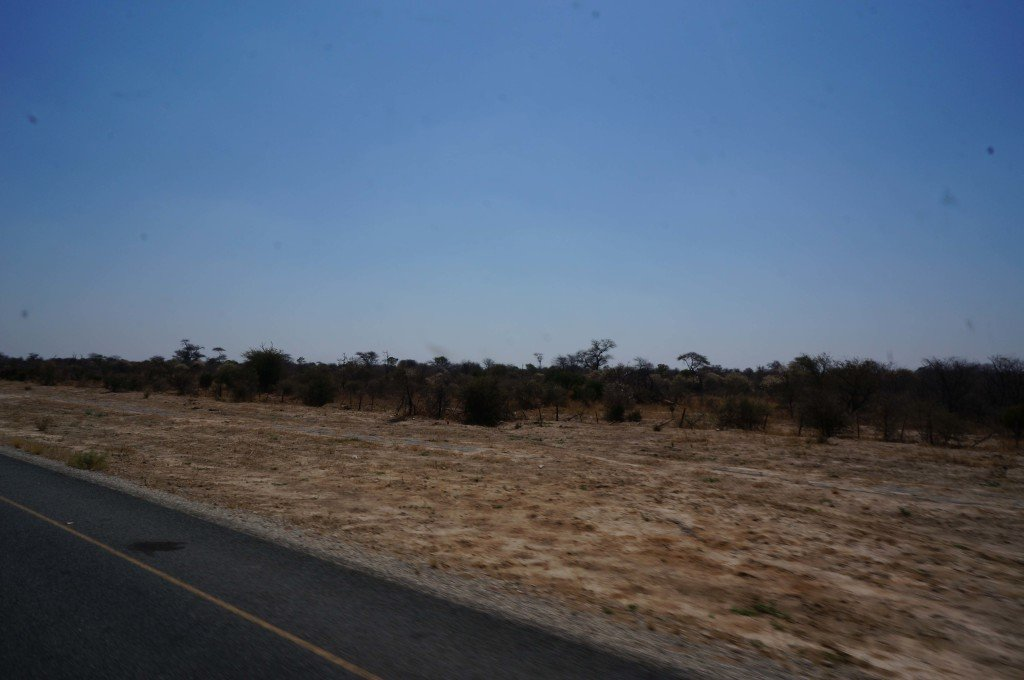 The scenery from the road driving from Maun to Kasane. Not much to look at.