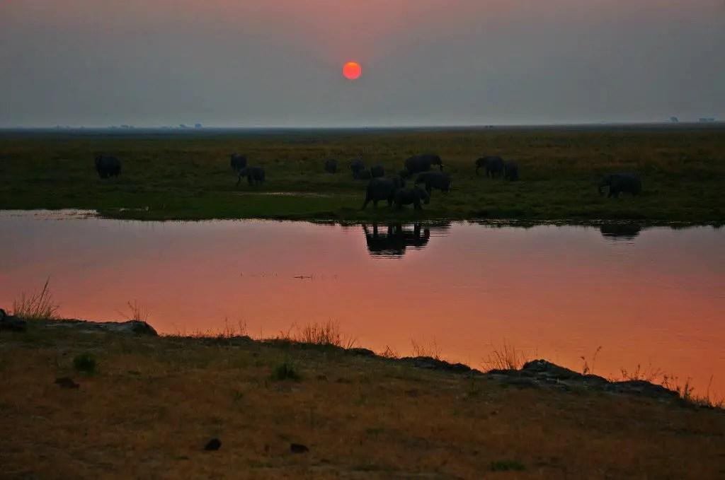 chobe sunset botswana elephants