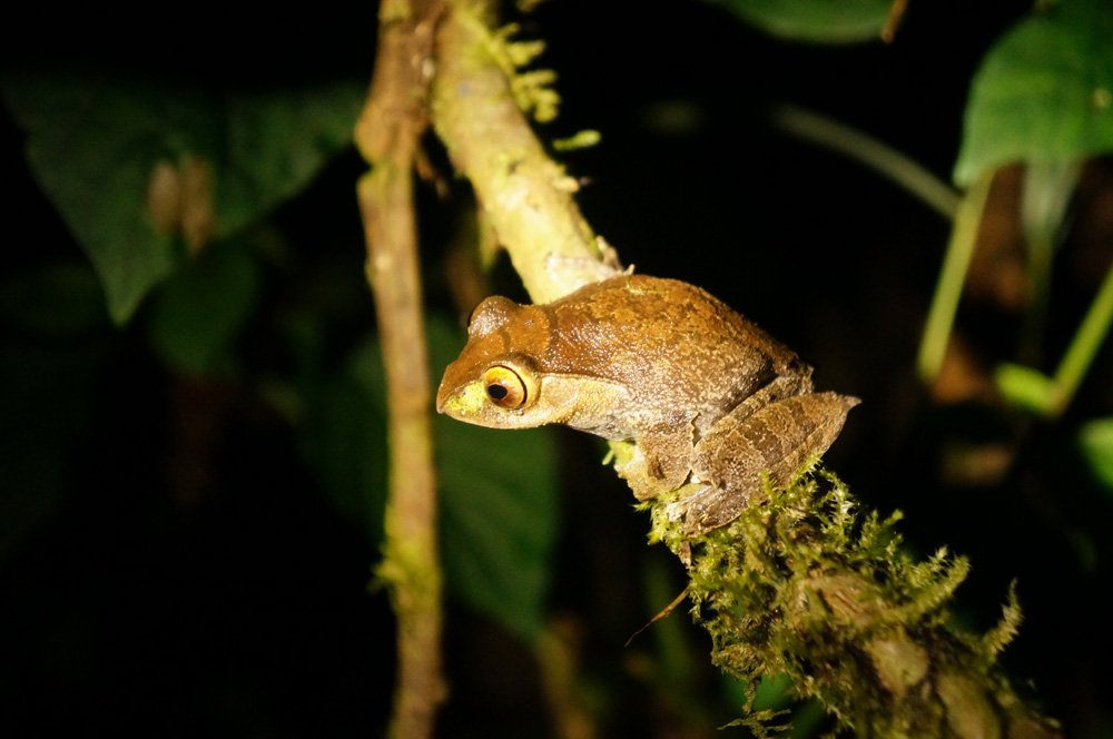 Not sure what type of frog this is but there's a 99% chance it only exists in Madagascar.