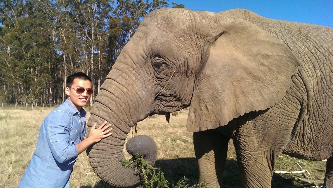elephant knysna sanctuary