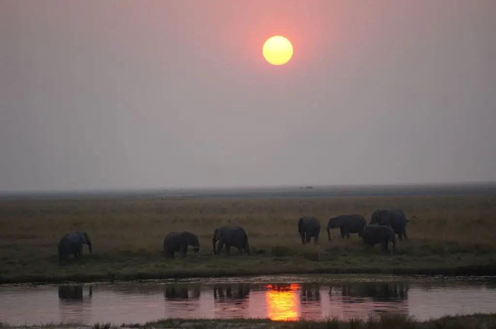 Chobe national park sunset elephants