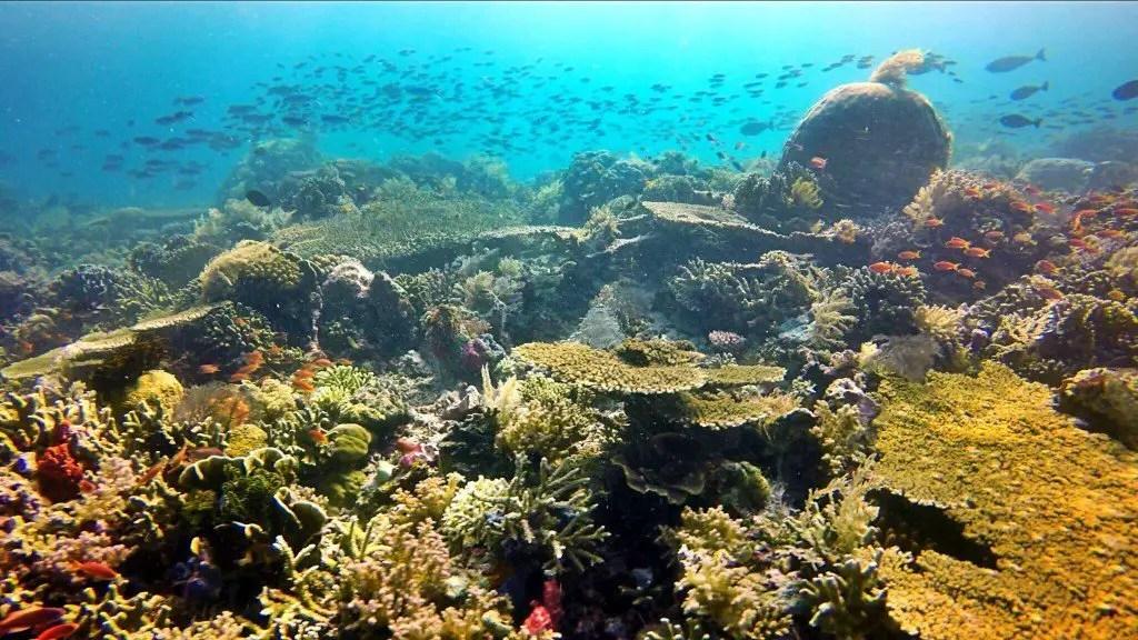 Komodo Diving corals