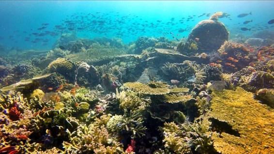 Komodo diving corals turtle indonesia